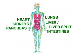healthy lifestyles for healthy organs, Dr Chris Barry, Madurai Rotary Club, organ donation, transplantation, MOHAN Foundation, Dr Sunil Shroff, deceased donor transplant in India, bLifeNY, #drbarryindia
